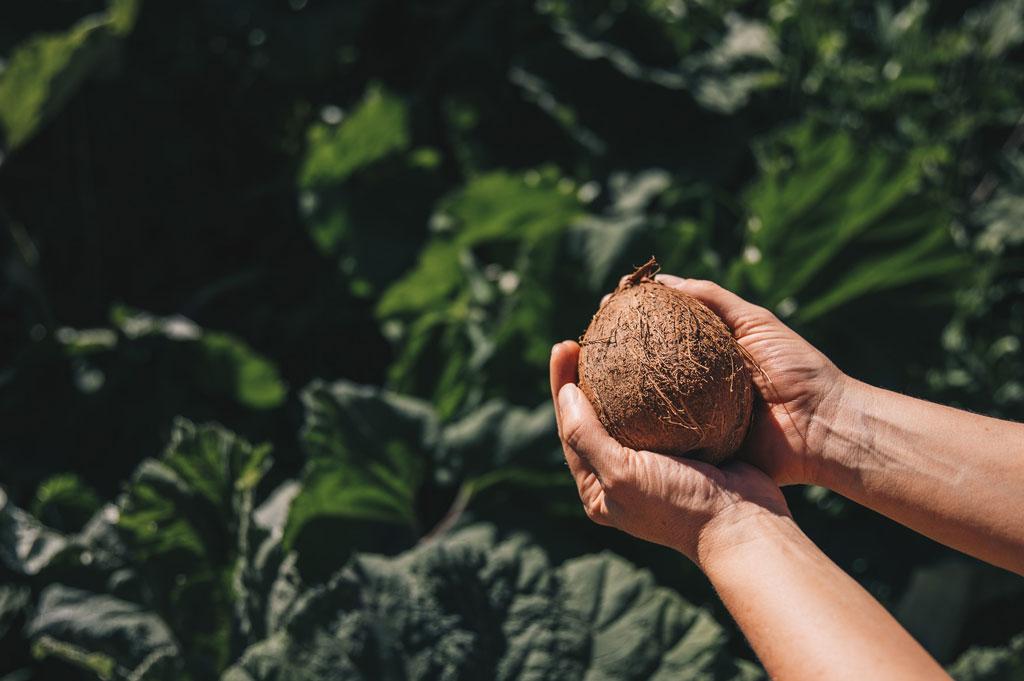 ekologisk-kokosolja